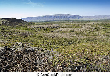 Shrubland in Iceland - Shrubland in icelandic highlands