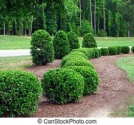 a row of well maintained and manicured shrubs and bushes