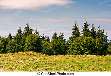 shrubs and fir trees on the edge of grassy meadow - shrubs...