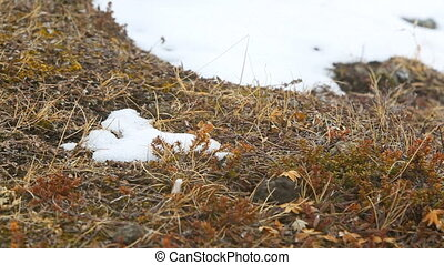 Shrubs in wintertime in a strong wind