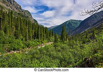 Shrubs near a stream in the mountains
