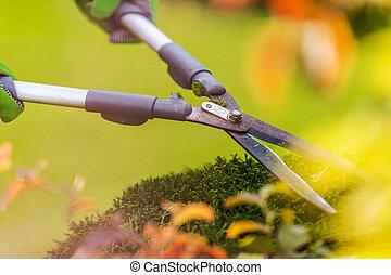 Shrubs Trimming Using Large Pro Garden Scissors