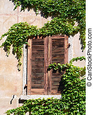 shuttered window with ivy