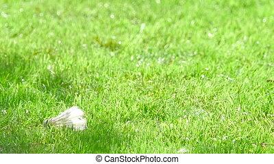 Shuttlecock on the grass