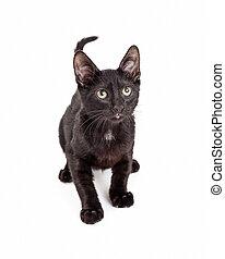 Shy Black Kitten Looking Up