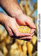 siła robocza, nagniotek, nasienie, rolnik
