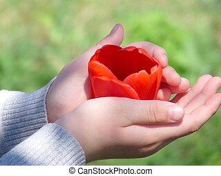 siła robocza, tulipan, dzieci