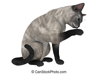 3D digital render of a siamese cat isolated on white background
