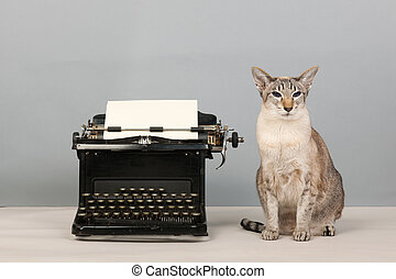 Siamese cat and type writer - siamese cat and vintage black...