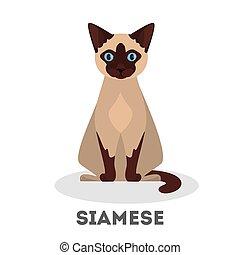 Siamese cat. Beautiful animal breed. Adorable animal