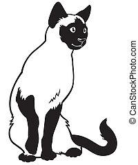 siamese cat black white
