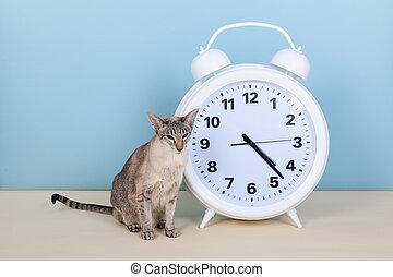 Siamese cat next to alarm clock
