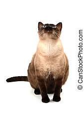 photo of one cat on white background