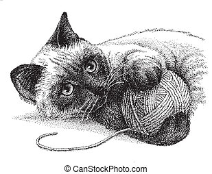 A siamese cat enjoys playing with a ball of yarn - vector version of my pen & ink drawing.