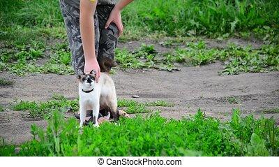Siamese cat rubs against teen boys legs - Siamese cat rubs...