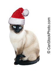 siamese cat wearing santa hat for christmas, isolated on...