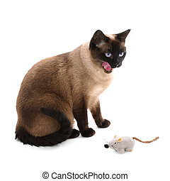 siamese cat with toy mouse