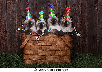 siamese, celebrando, chapéus, aniversário, gatinhos