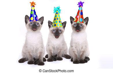 siamese, katjes, vieren, een, jarig, met, hoedjes