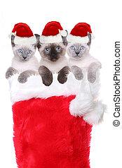 Kittens in a Stocking Wearing Santa Hats