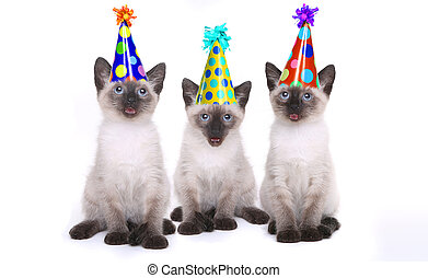 siamesisk, kattungar, fira, a, födelsedag, med, hattar