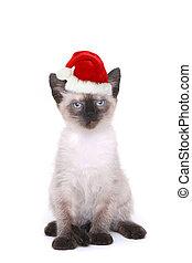 siamesisk, vit hatt, jultomten, kattunge