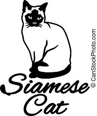 siamois, race, nom, chat