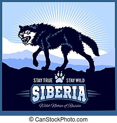 Siberia - a wolf on the background of the plain of Russian...