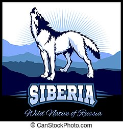 Siberia - a wolf on the background of the plain of Russian Siberia