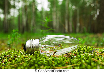 Siberia, Russia. A light bulb on the grass on the background of a forest.