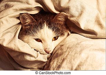 siberian cat close up monochrome portrait