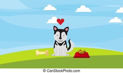 siberian dog love bone plate food animation hd