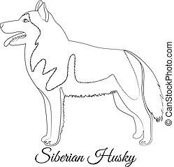 Coloring page of alaskan malamute or siberian husky dog ...