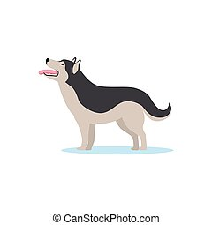 Siberian husky dog vector Illustration
