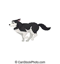 Siberian Husky running, white and black purebred dog animal with blue eyes vector Illustration on a white background
