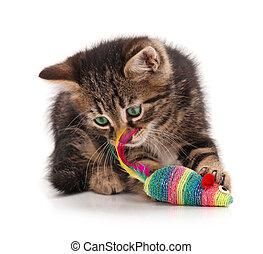 Siberian kitten - Cute kitten caught toy mouse isolated on ...