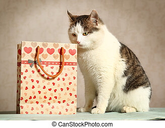 siberian male cat with present bag sniffing - siberian male ...