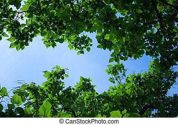 Sicht auf Bäume und Himmel - Blick von unten durch Bäume auf...