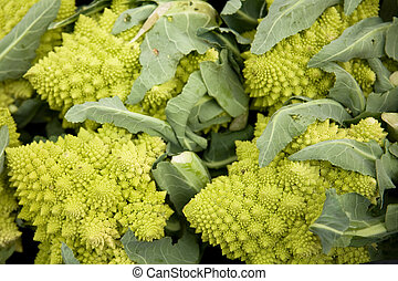 "Sicilian broccoli - ""Cimoni\"" a type of cabbage from Italy,..."