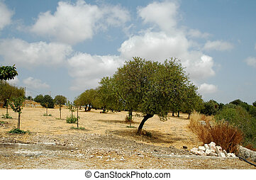 Sicilian Trees1 - Landscape in Italy