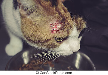 sick cat with patches