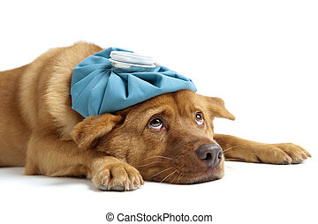 Sick dog sideways on white background