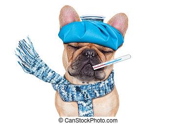 SICK ILL DOG - french bulldog dog with headache and hangover...