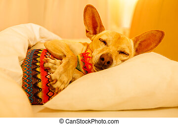 Sick ill sleeping dog