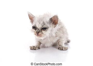Sick kitten on white background