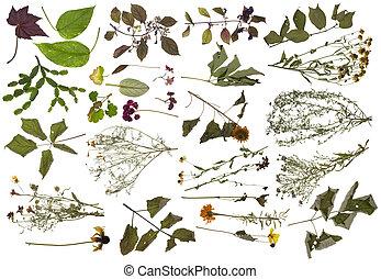 sick plants isolated set