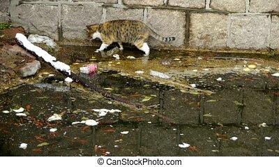 side., grająca kałuża, kot