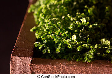 Side lit moss in wooden box - Macro view of moss lit from...