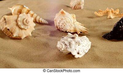 Side of different sea shellsand starfish on beach sand, black, rotation