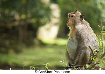 Side portrait of thoughtful fat monkey sitting on tree branch. Background of green landscape